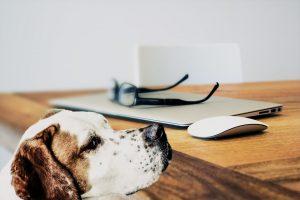 Un perro olisquea una mesa
