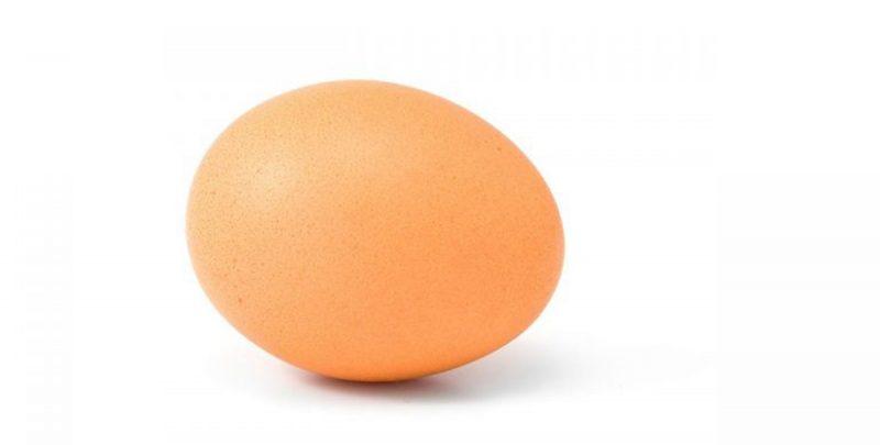 meme_like_world_record_egg